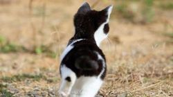 田代島の猫はしなやかに生きるーー東北の猫島はいま(画像)
