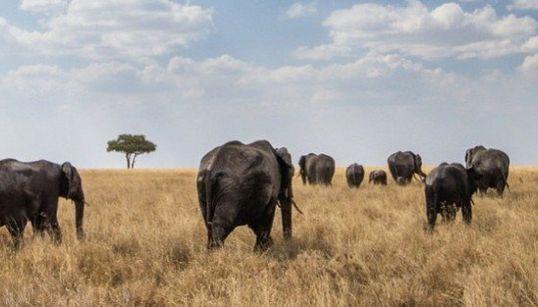 タンザニアの息をのむような絶景〜レンズの向こう側