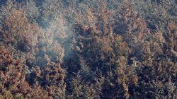 スギ花粉の飛散が本格化