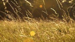 セシウムと結合し植物への吸収抑える化合物