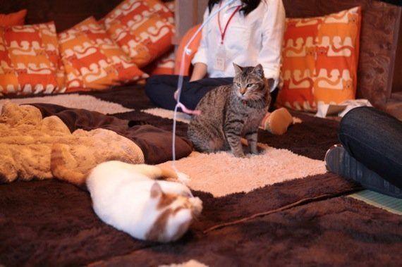 岐阜の猫カフェで始まる、ビジネスと猫保護活動の素敵な関係