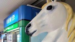 南浦和の駅に、馬が現れた(画像)