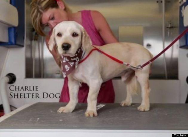 殺処分寸前でイメチェンした子犬、直後に引き取り手が見つかる(動画)