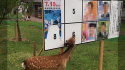 「鹿が選挙ポスターを食べてる!」奈良では普通なの?