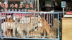 犬肉食は虐待か、伝統文化か 平昌オリンピックで進む韓国の「犬肉離れ」