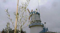 【3.11】100年後の未来のために「ひろのオリーブ村」が植える苗木