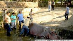 「残忍で非人道的な犯行」エルサルバドルの動物園のスターが殺害される