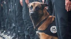 【パリ銃撃戦】警察犬ディーゼルも犠牲になった