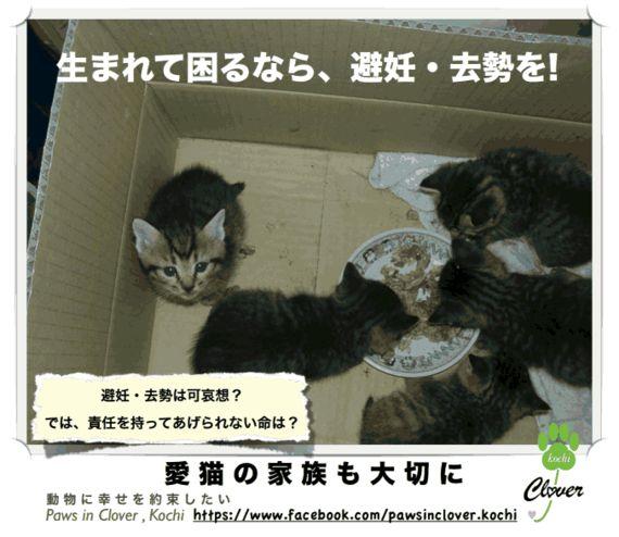 誰も猫を殺処分したくはない―命の現場が抱える葛藤と現実―