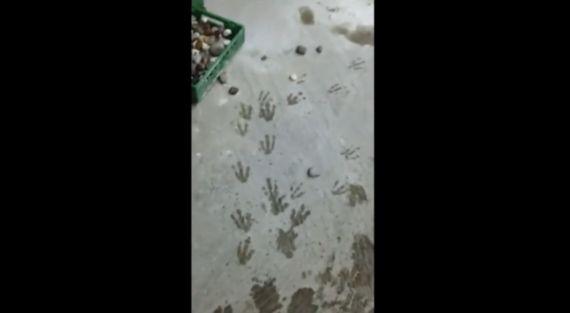 デンマークの動物園でペンギンが集団脱走を試みる(動画)
