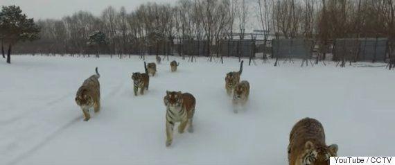 村上春樹氏が愛したライオン、女性職員襲う 小諸市動物園の「ナナ」に何が?