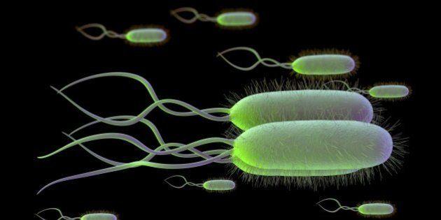 ピロリ菌の胃がん発症原因の一端発見