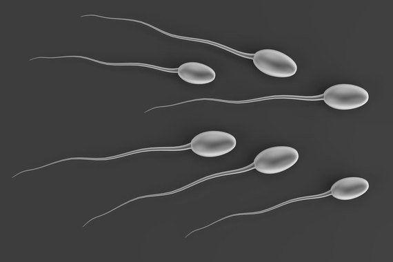 ヒト幹細胞から卵や精子の前駆細胞を高効率で作製