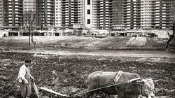 都市と農村が混じり合う。1970~80年の韓国はこんな感じだった。【画像集】