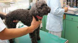 ペットも人も安心して暮らせる社会に 動物病院や自治体、飼い主がつながりペットの健康状態を見守るシステム