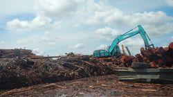 大手製紙のAPRIL社、「持続可能な森林管理方針」発表直後に違反が報告される