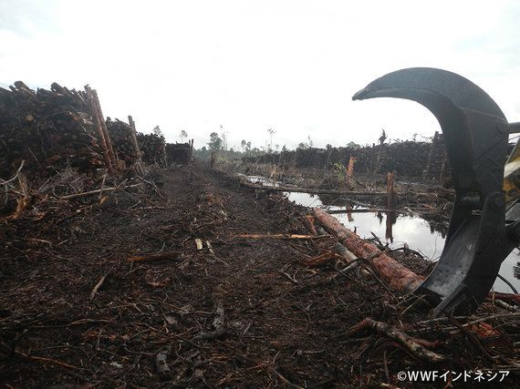 APRIL社の新たな「持続可能な森林管理方針」発表直後にNGOが違反報告