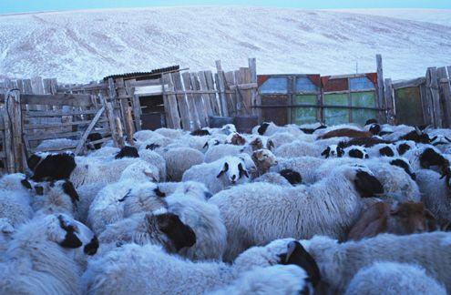 モンゴル遊牧民の「羊毛フェルト」青年海外協力隊OGが商品化し販売