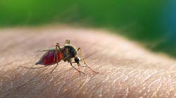 マラリア薬剤耐性のタンパク質を解明