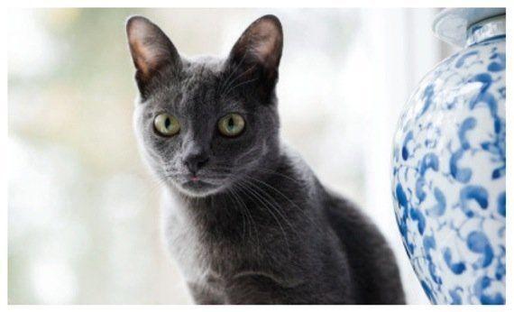 猫種の歴史を紐解く物語を綴る、『世界で一番美しい猫の図鑑』