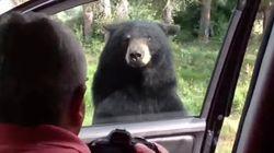 クマ「ちょっとお邪魔しますよ」子供「ギャァアー!!」(動画)