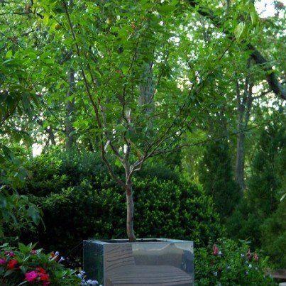 なぜ1本の木に40種類のフルーツが?