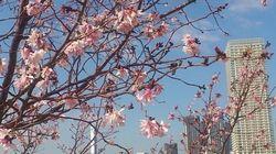春の花粉は爆発的な飛散量に? 3カ月予報(堀江万喜)