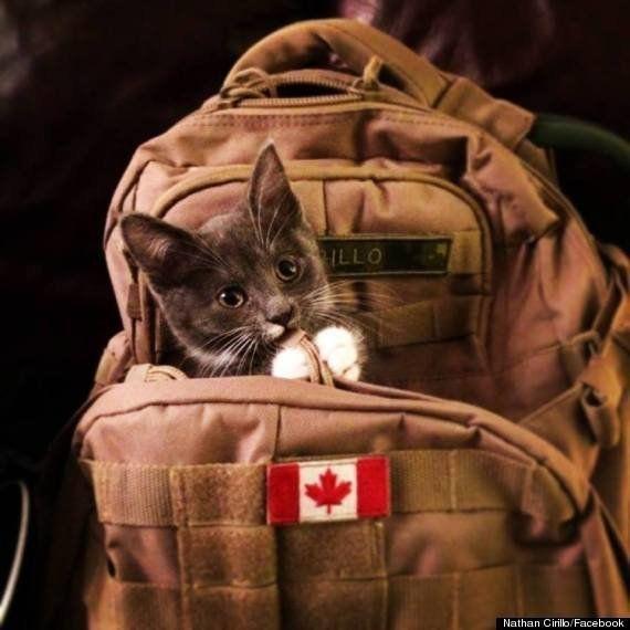 カナダ銃乱射事件の犠牲者、ネイサン・シリーロさんの愛犬たちは今も主人の帰宅を待つ