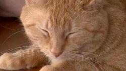 猫と受刑者、お互いへの愛情で辛い過去から抜け出す