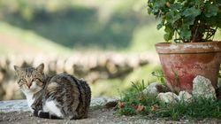 猫たちは、スペインの陽気な街並みがよく似合う(画像)