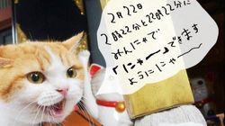 【猫の日】にゃらん、みんにゃに「にゃー」を呼びかける(画像)