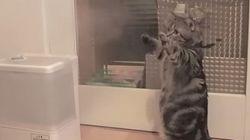 猫、加湿器の蒸気をみて......(動画)
