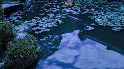 京都・清水寺の四季が織りなす景色が美しい【画像】
