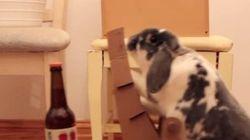 ウサギ、ビールを飼い主に届ける