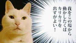モニターの前から動かない猫で遊ぶ、たったひとつの冴えた方法【画像】