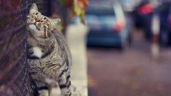 猫は、ローマの街や遺跡を気ままに散歩する(画像)