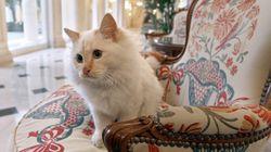 パリの街は、猫たちの遊び場【画像】