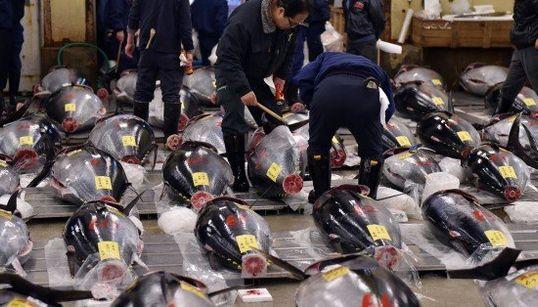 マグロ初競り、日本の風物詩(画像)