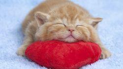 「ずっと見つめていたい」スヤスヤ眠る子猫たち【画像集】