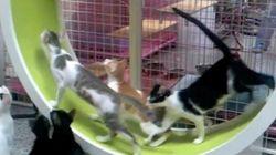 猫たちが無限に全力疾走する装置がすごい【動画】