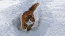 猫たちも冬を楽しんでいる【画像】