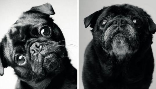 犬のおじいちゃん、その瞳に映る豊かな人生(画像集)