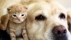 猫と犬、本当は仲良しなんです(画像)