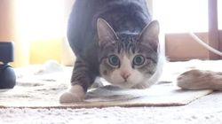 猫、こうやってお尻フリフリする(動画)