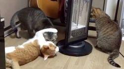 猫、見たことない方法で猫を回す(動画)