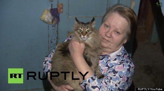 猫、赤ちゃんをニャンとか救いたい(画像)