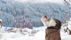 冬の猫は、雪のなかで生き生きと遊ぶ【画像集】