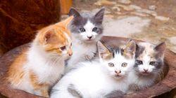 猫は、モロッコの異国情緒あふれる街並みがよく似合う(画像集)