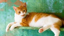 猫たちは、常夏のハワイで今日ものんびり【画像】