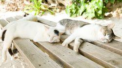 沖縄の猫のように、ゆったりとした時をすごそう【画像】